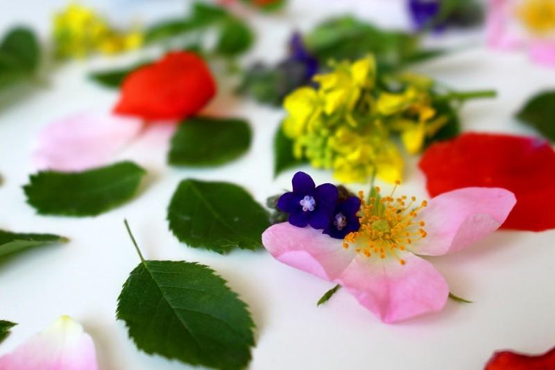 flowers-3397279_960_720