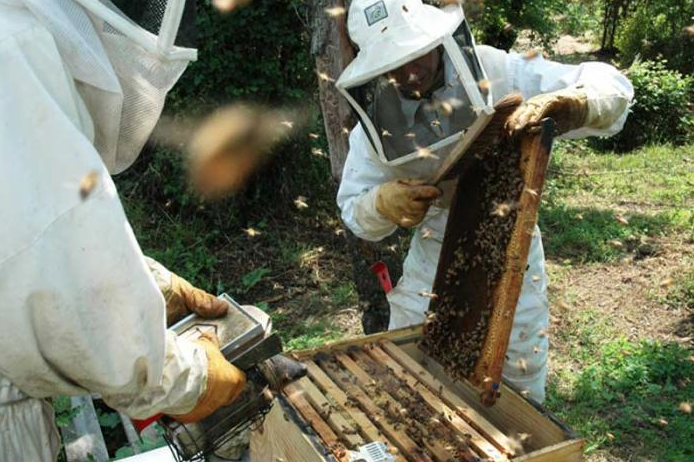 grange-aux-abeilles