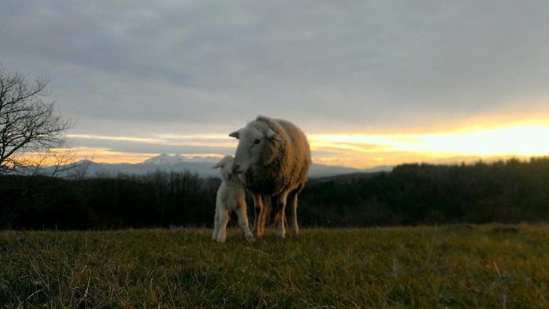 agneaux-lucie