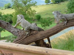 ferme reptiles 300x225