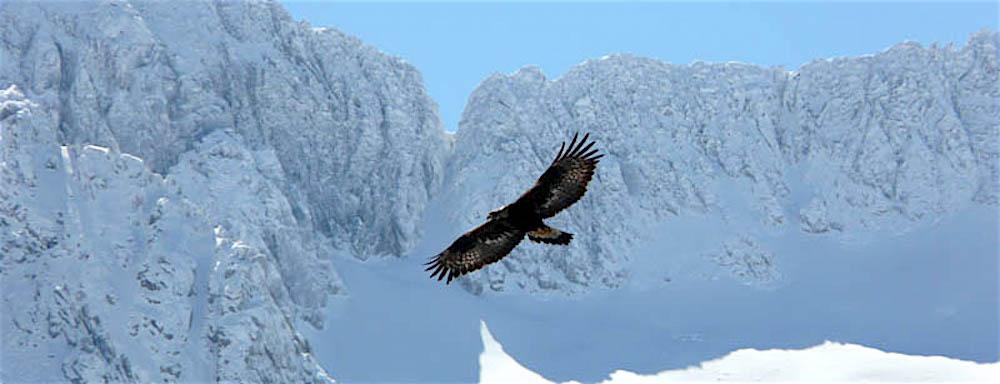 Monts d'Olmes : Tant de mots pour un blanc manteau – 12 février