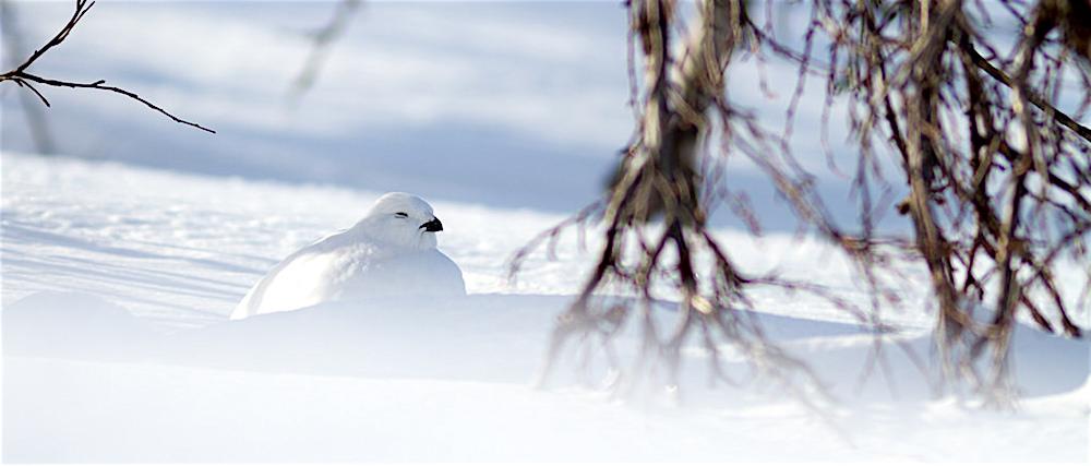 Montségur : La nature en hiver, mille et une stratégies ! – 19 février